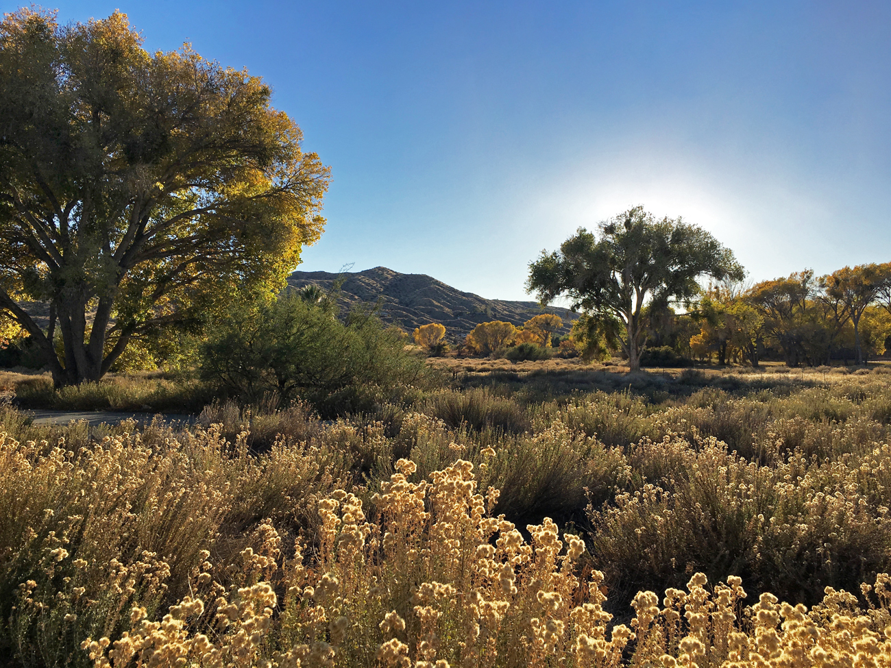 Valley of desert shrubs and cottonwood trees in the glow of the late afternoon sun at Big Morongo Canyon Preserve