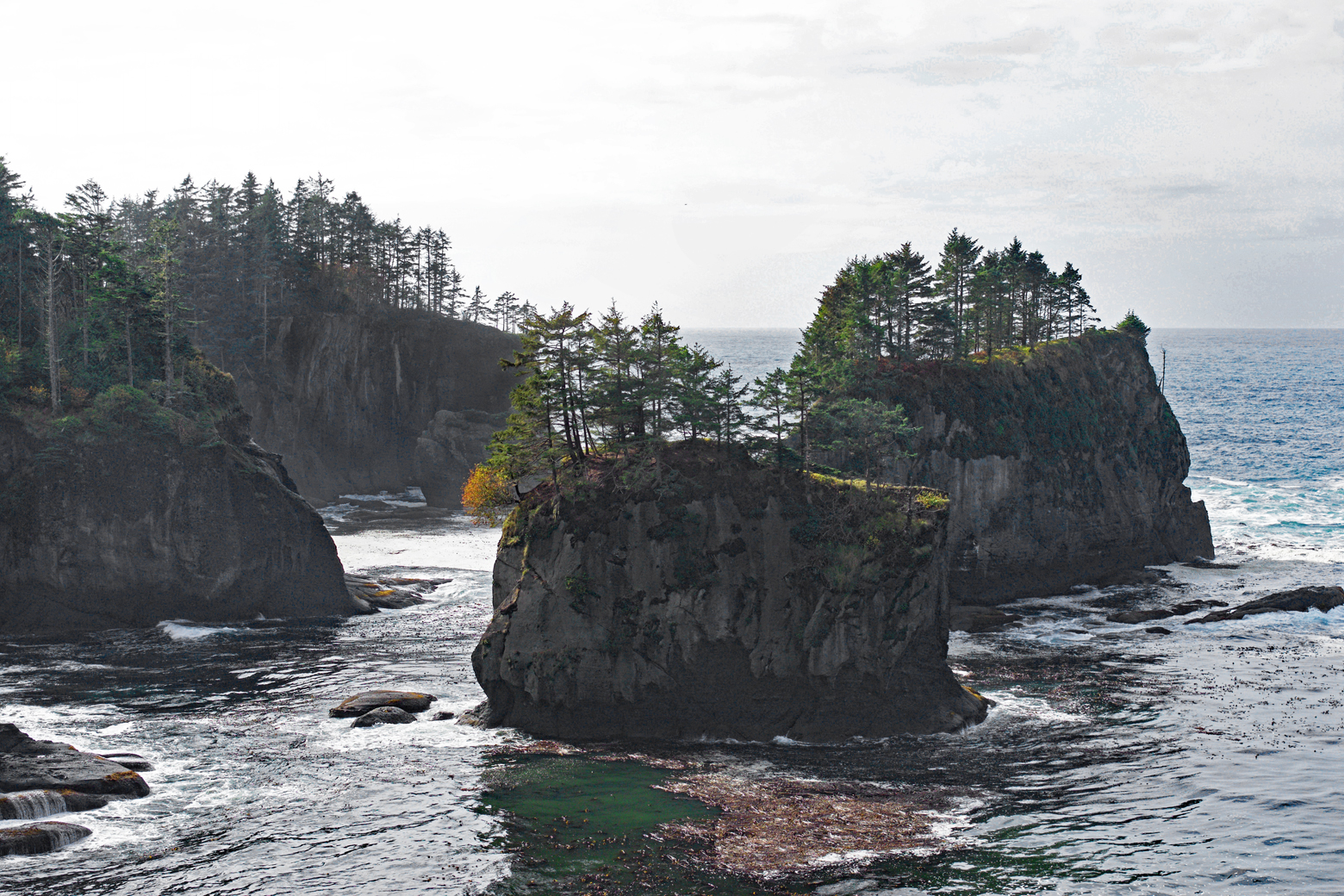 Sea stacks with trees growing on top viewed from Cape Flattery