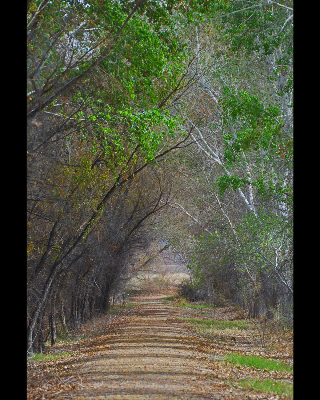 Nature trail with trees forming an arch over the trail at Cibola