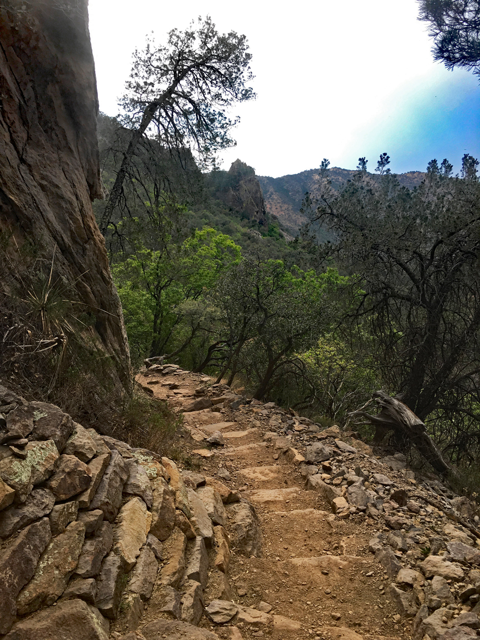 Switchbacks of the Pinnacles Trail as it climbs into the forest in Big Bend National Park